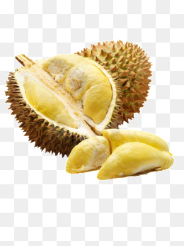 Durian, Yellow, Fruit, Durian PNG Image and Clipart - PNG Durian