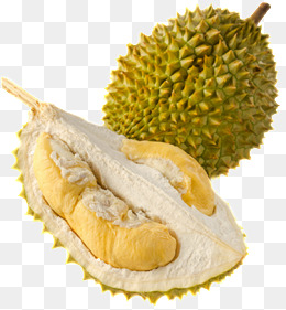 Tropical fruit durian, Durian, Cut Durian, Fruit King PNG Image and Clipart - PNG Durian