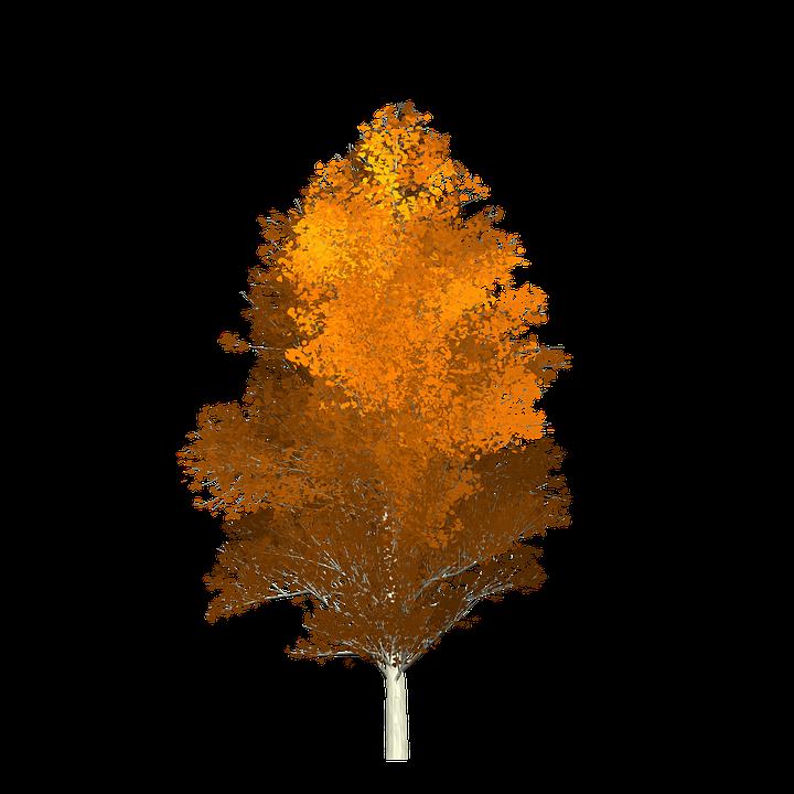 asp træ efterår appelsin malet træ billede maleri - PNG Efterar