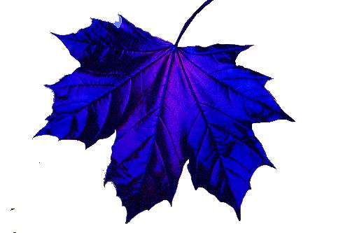 blue-leaf.png (500×333) - PNG Efterar