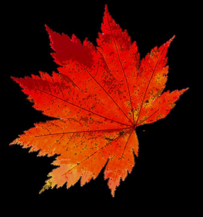 efterår løv farve natur gyldne efterår blad - PNG Efterar