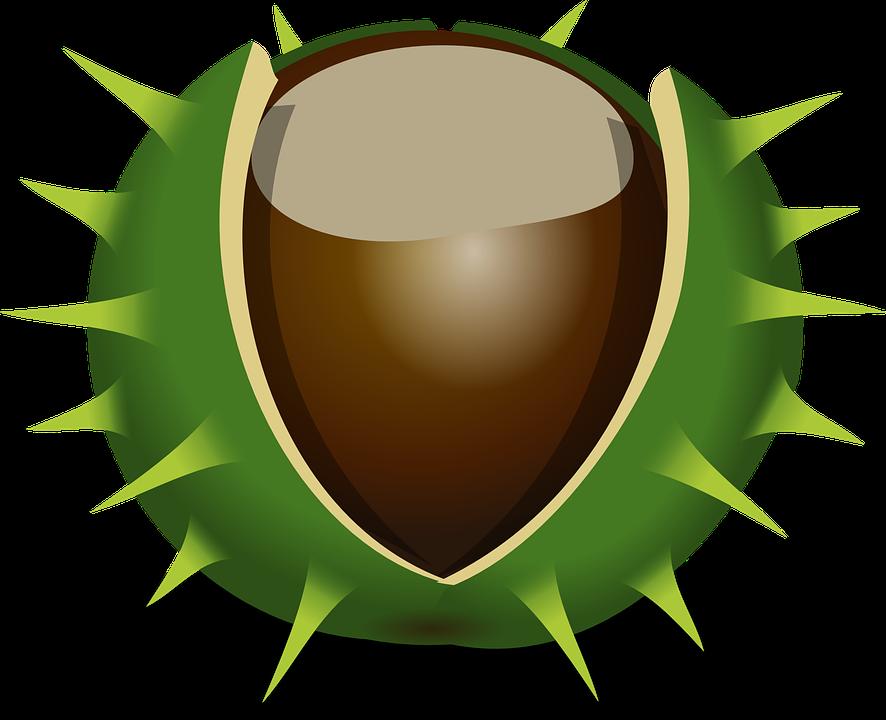 kastanje efterår brun frugt natur møtrik - PNG Efterar