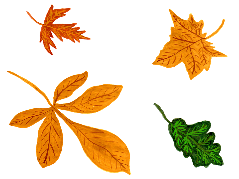 løv efterår blade akvarel isolerede håndmalet - PNG Efterar