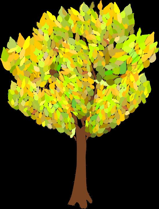 træ efterår filialer pyntegrønt blade - PNG Efterar