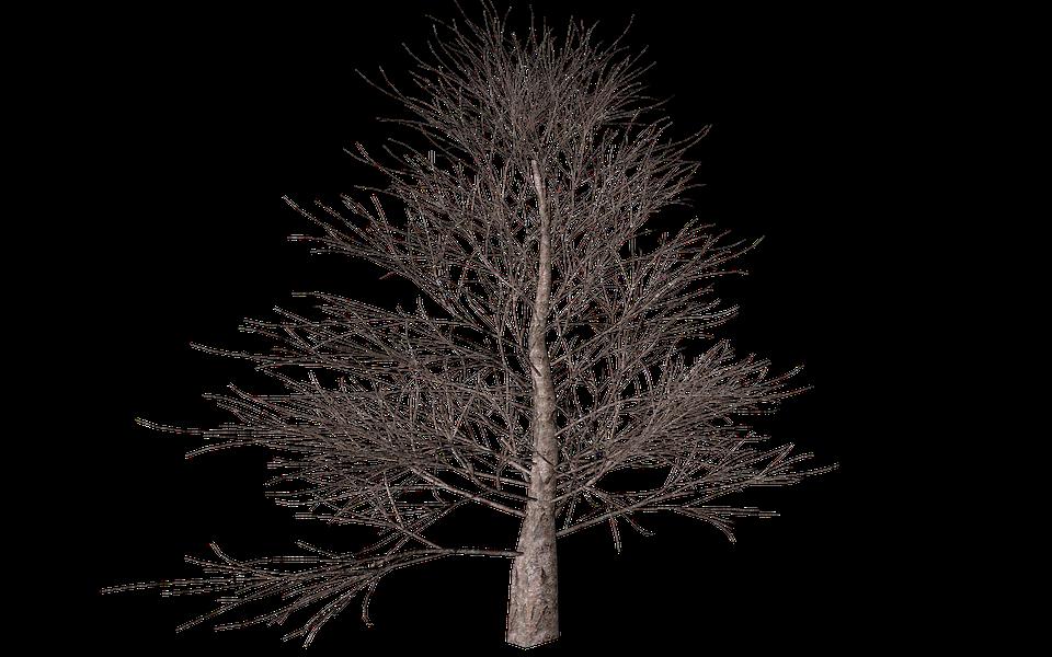 træ isolerede efterår digital kunst natur - PNG Efterar