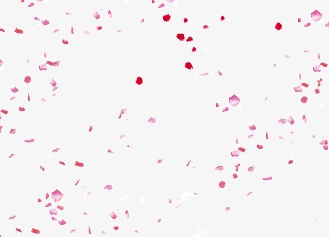beautiful flower petals falli