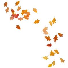 autumn flowers png png fall flowers transparent fall flowers images. | pluspng
