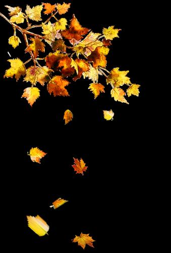 feuilles - PNG Feuille Dautomne