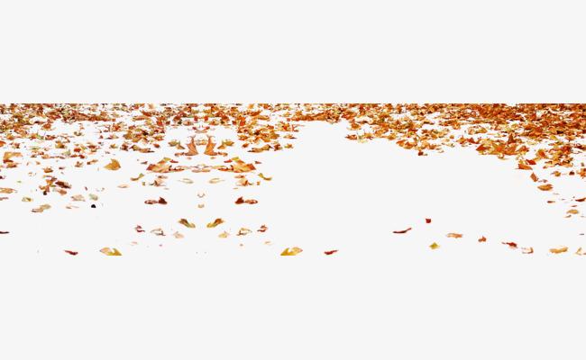 Les feuilles du0027automne, Caduques, Lu0027automne, Les Feuilles De Fond Image PNG  gratuite - PNG Feuille Dautomne