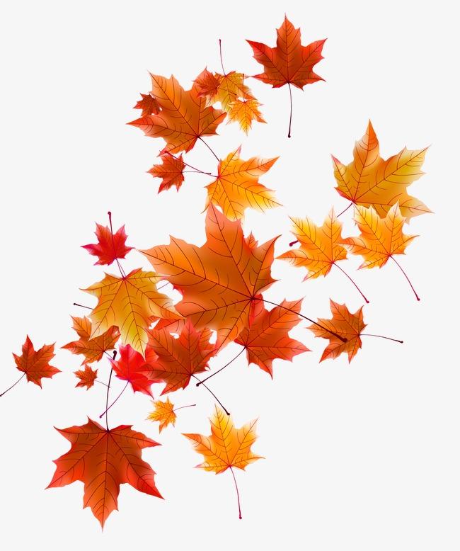 Les feuilles du0027automne, Lu0027automne, Caduques, Lu0027automne PNG et vecteur  gratuits - PNG Feuille Dautomne