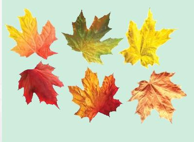 sonbahar yaprağı - PNG Feuille Dautomne