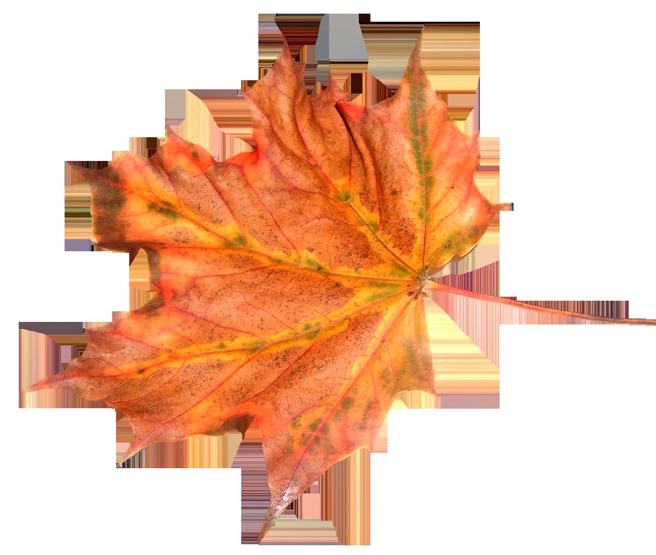 Tubes arbres png suitenature : feuilles png suite » - PNG Feuille Dautomne