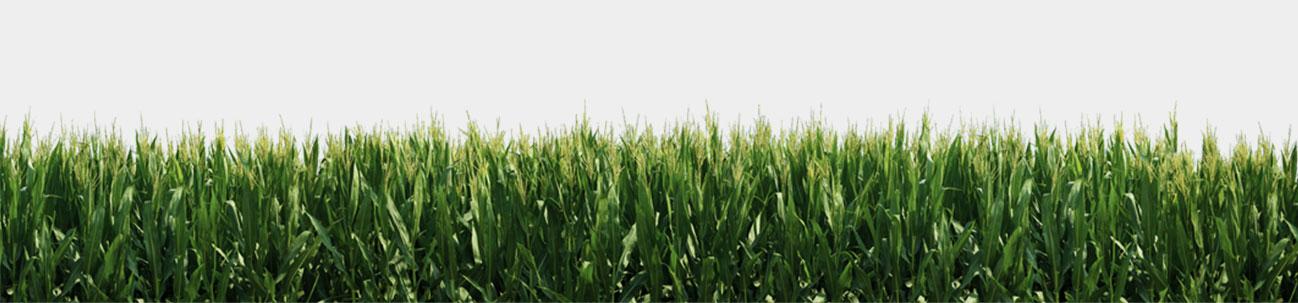 PNG Field-PlusPNG.com-1298 - PNG Field