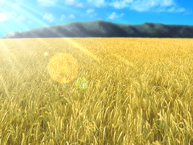 File:Wheat field.png - PNG Field
