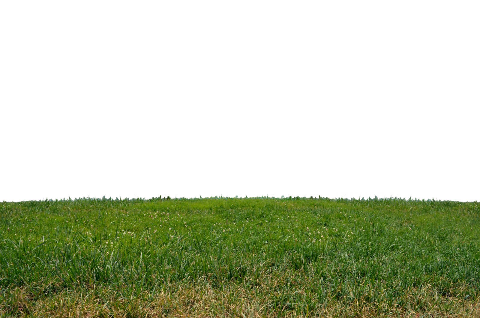 Grass PNG Clipart - PNG Field