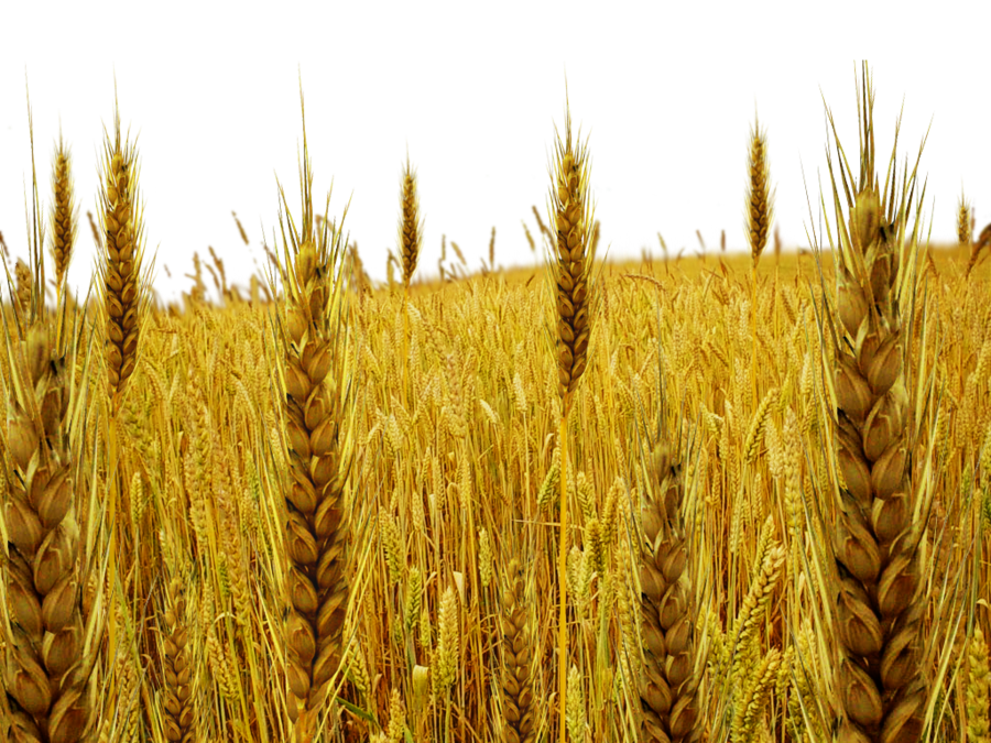 tare field png by dbszabo1 PlusPng.com  - PNG Field