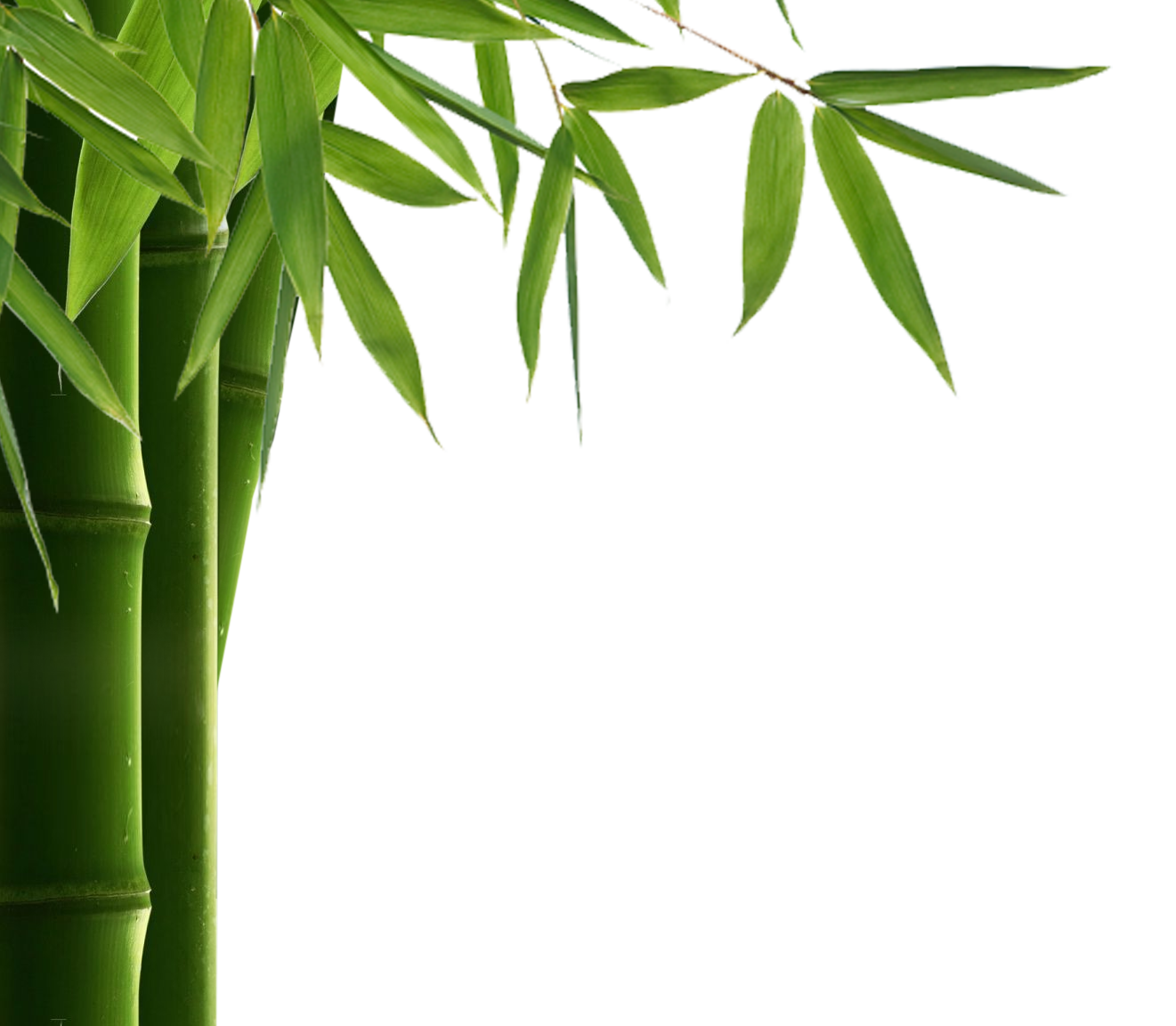 File Name Bamboo Frame Transparent Clip Art