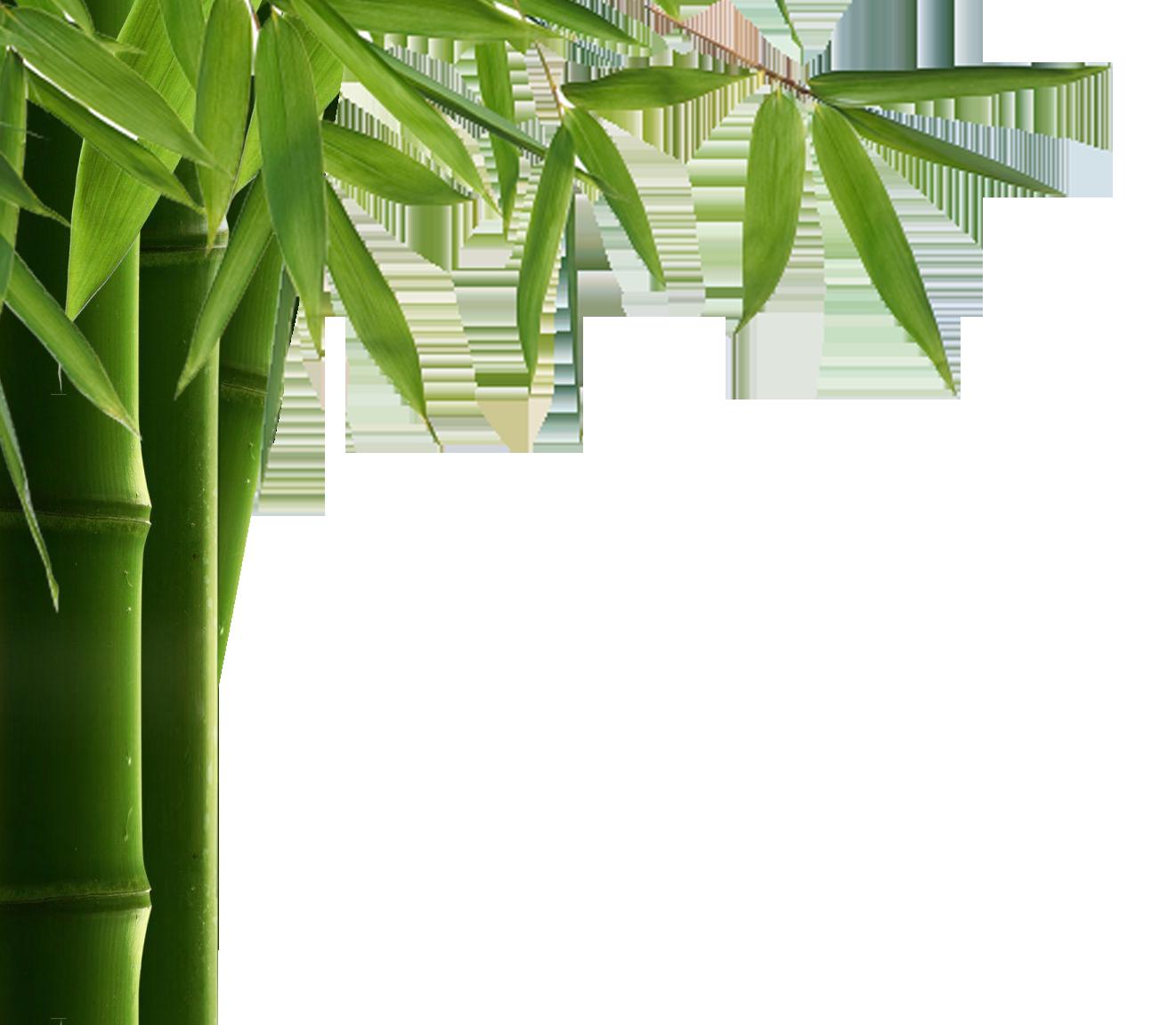 Bamboo PNG - 5961