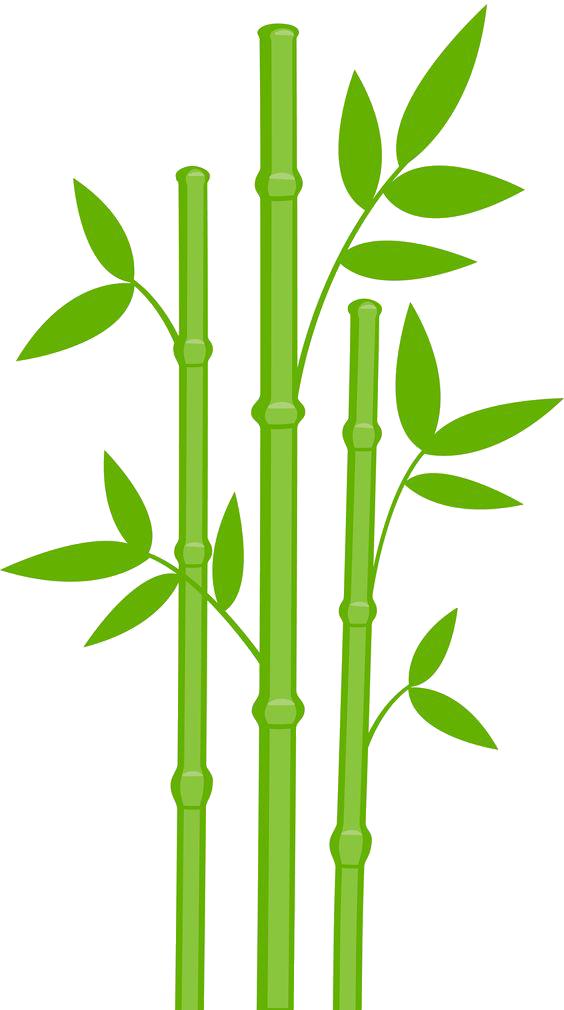 Bamboo PNG - 5962