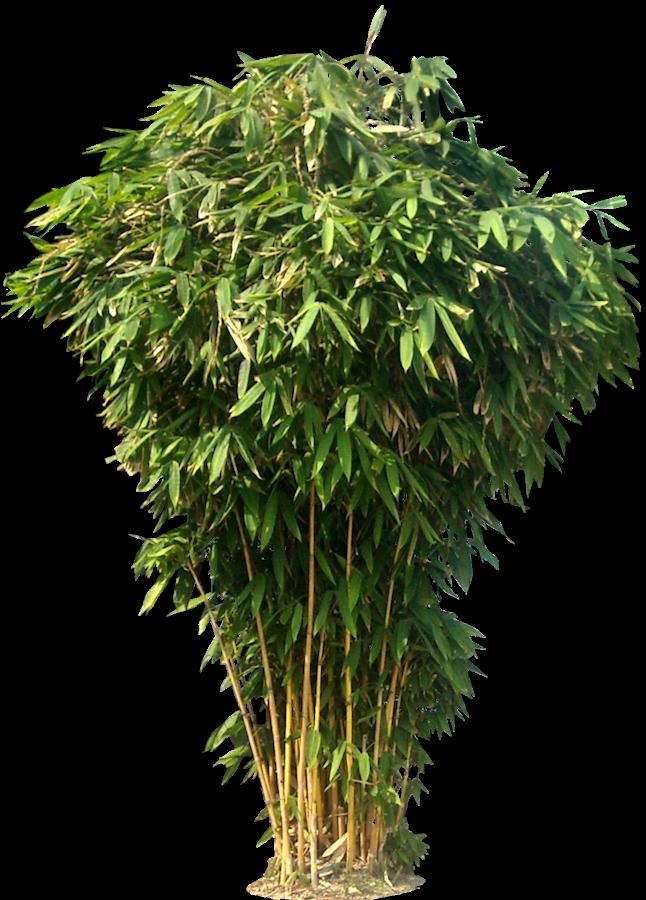 Bamboo PNG - 5967