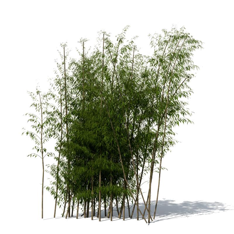 Bamboo PNG - 5958