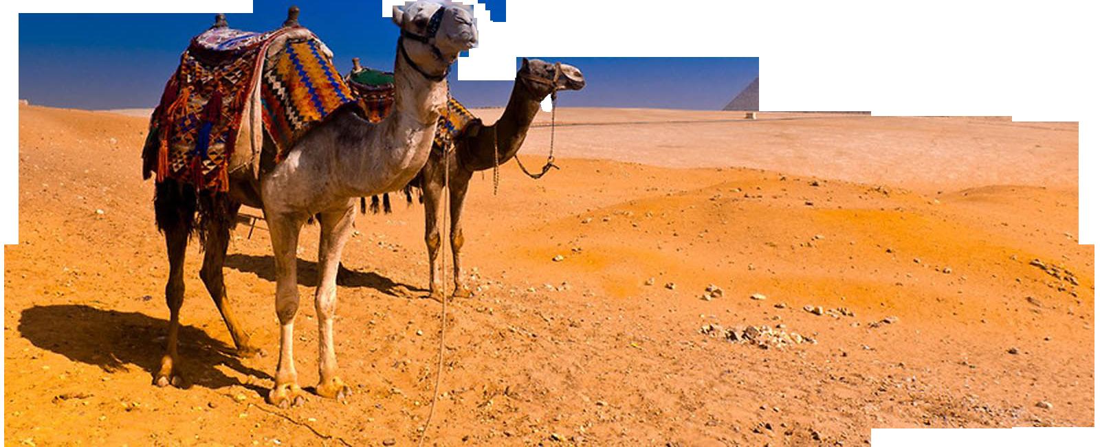 PNG File Name: Camel PlusPng.com  - Camel PNG