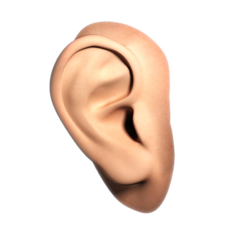 Ear PNG - 6711
