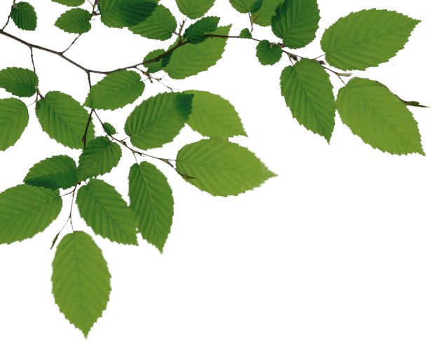 Branch PNG - 4491