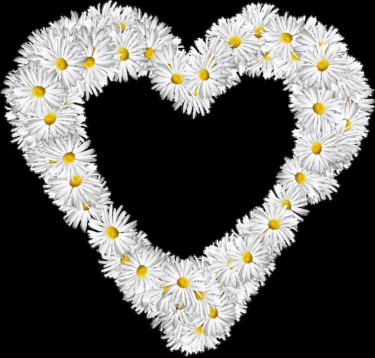 cuore fiori png amore san valentino margherite - PNG Fiori Gratis