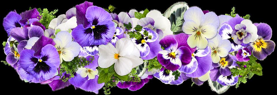 fiori decorazione linea di fiori decor png - PNG Fiori Gratis