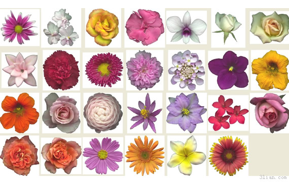 fiori png trasparente materiale - PNG Fiori Gratis