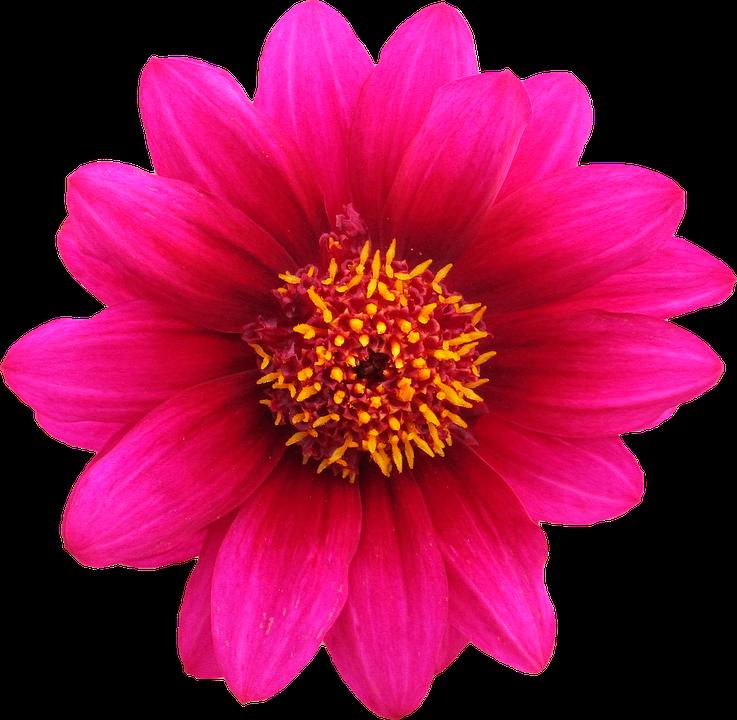 png ritaglio fiore grafica - PNG Fiori Gratis