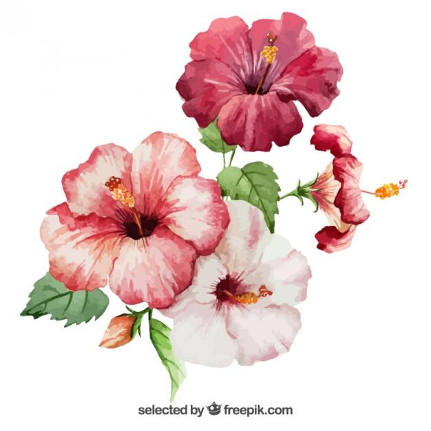 watercolor-hibiscus-flowers_1002-20 - PNG Fiori Gratis