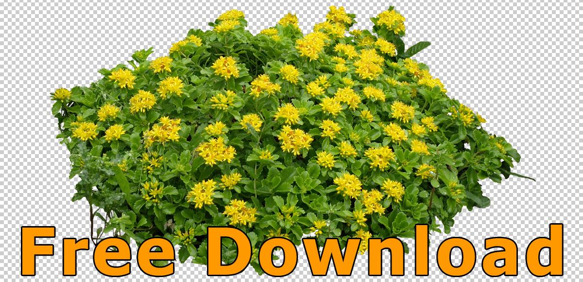 PNG Free Download - 66417