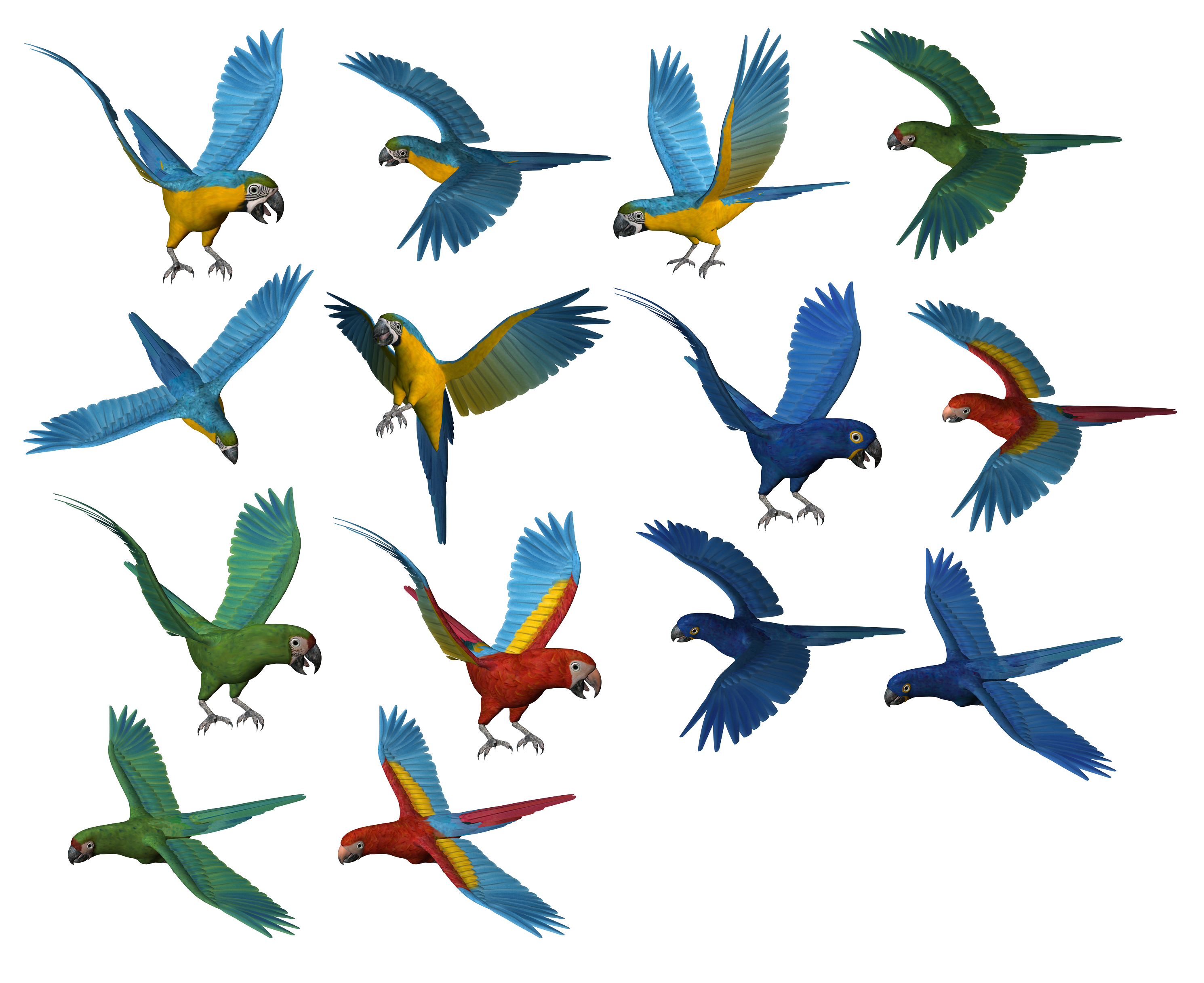 Parrot PNG images, free download - PNG Free Download