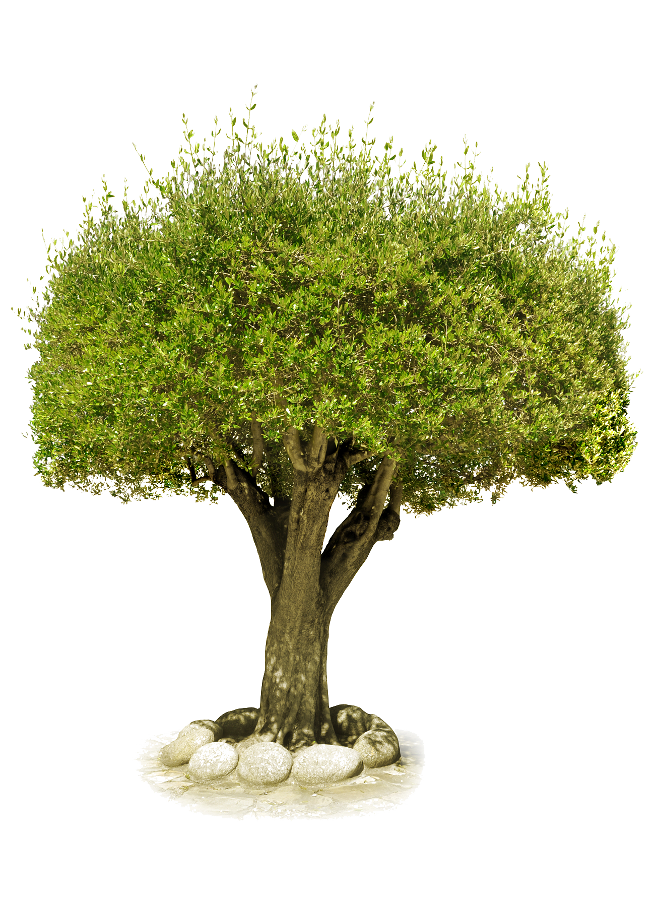 tree png image, free download, picture - PNG Free Download