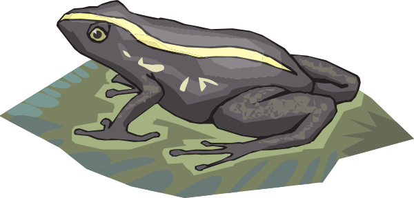 Download this image as: - PNG Frog On Lily Pad
