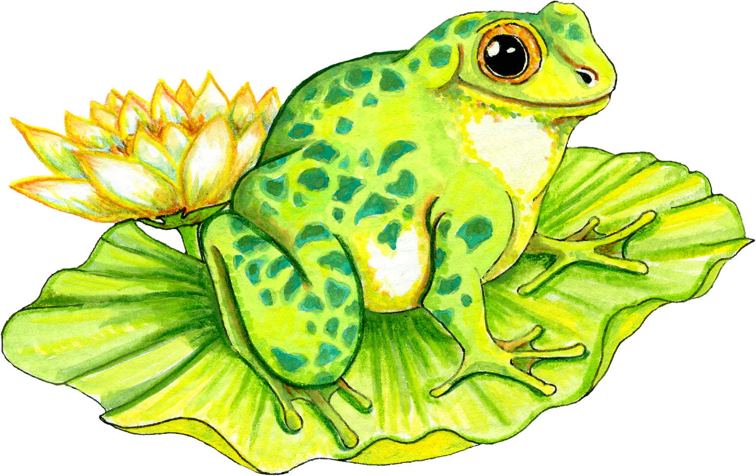 Free Frog on Lilly Pad Graphic - Transparent PNG files and Paint . - PNG Frog On Lily Pad