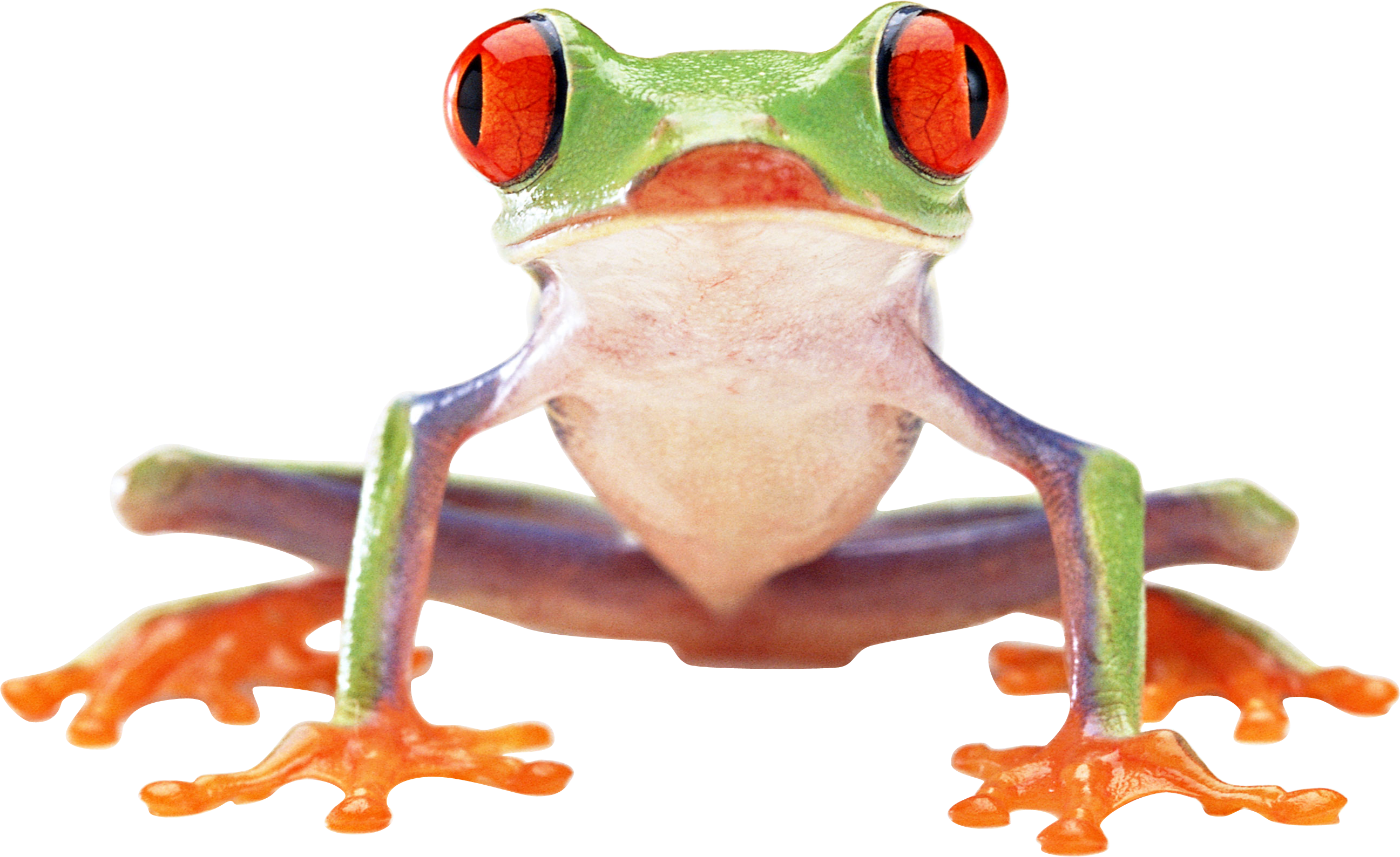 Free Frog Png Results - PNG Frogs Free