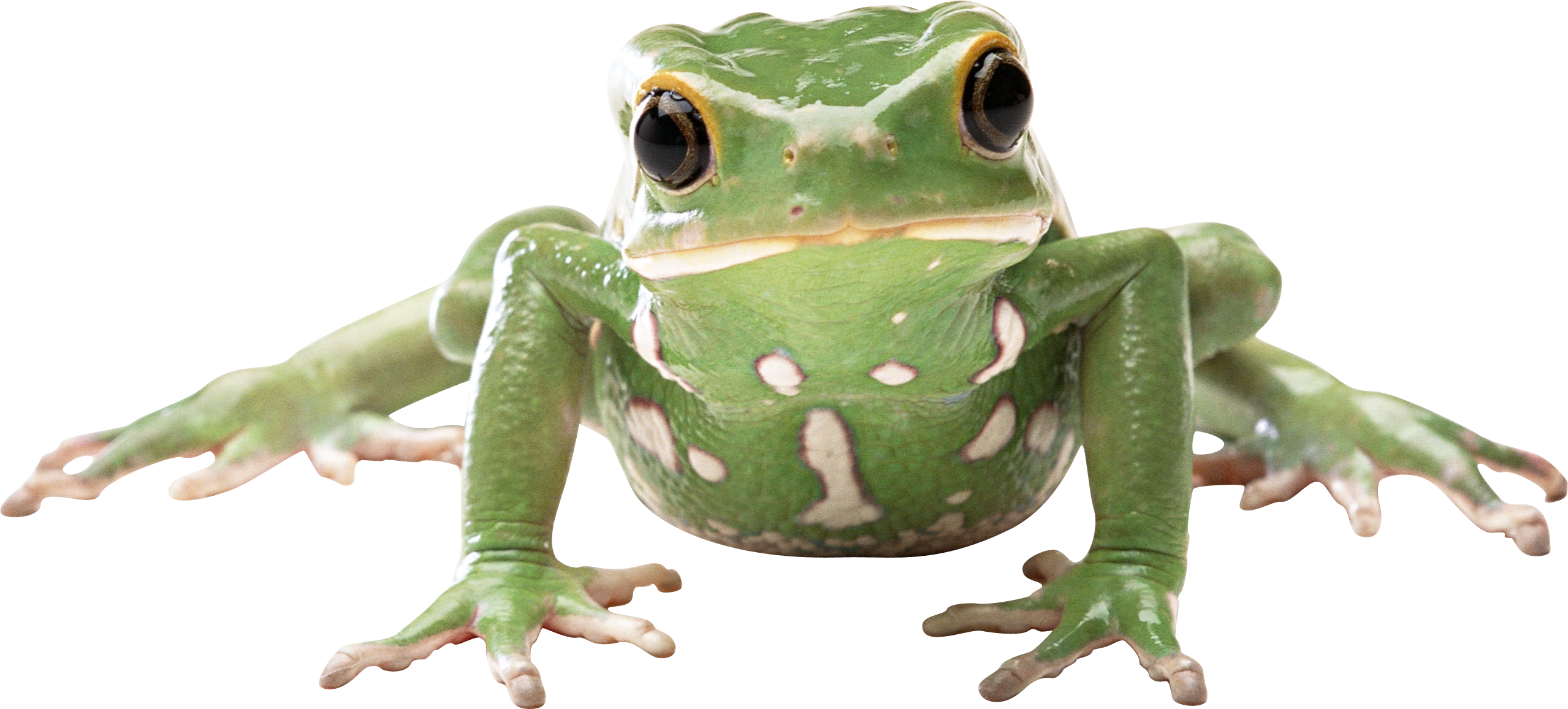 Frog #1271935 - PNG Frogs Free