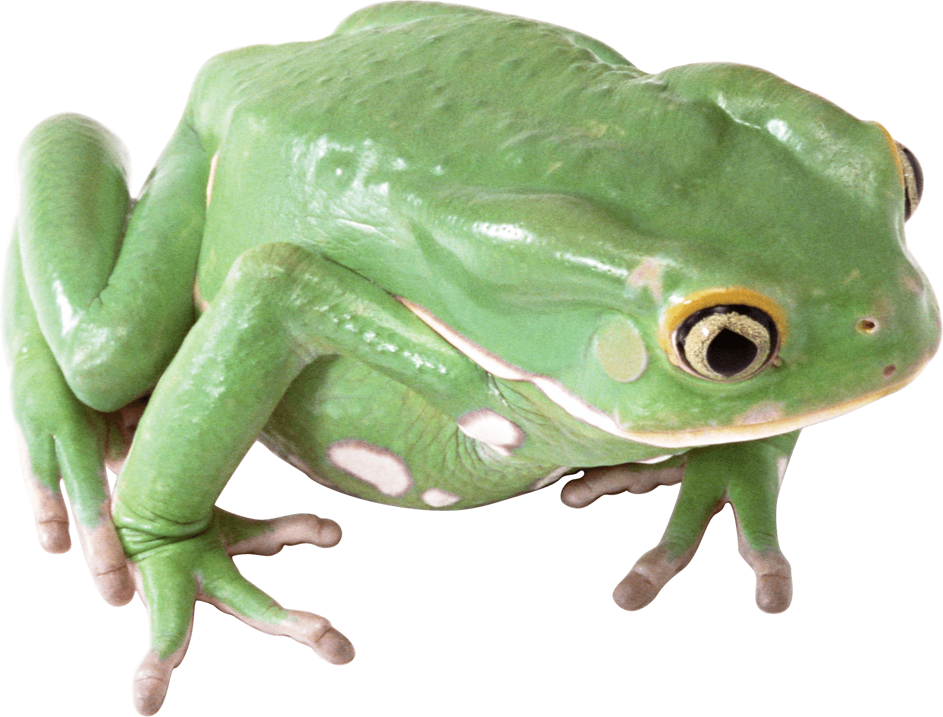 Frog Png Image PNG Image - PNG Frogs Free