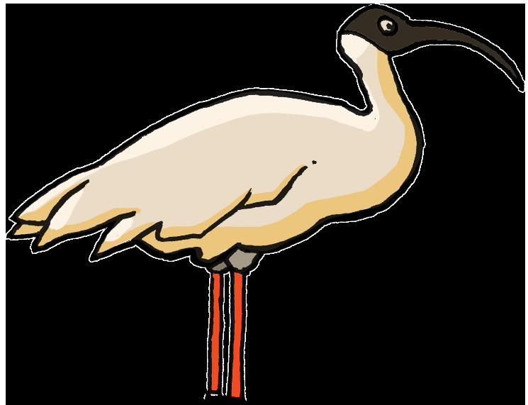 PNG Fugle - 66222