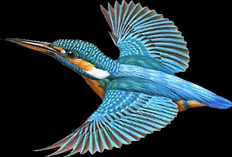 tubes oiseaux - PNG Fugle