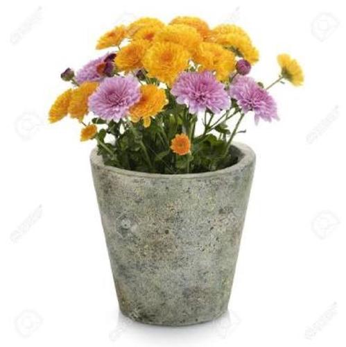 Flower Pot - PNG Gamla