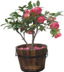 Flower Pots - PNG Gamla