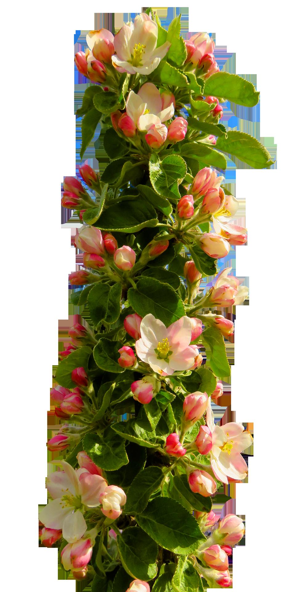 Spring Flower PNG Transparent Image - PNG Gamla