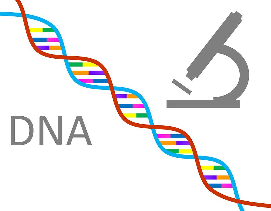 PNG Genetics - 67103