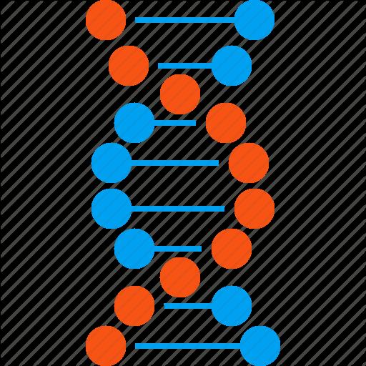 PNG Genetics - 67099