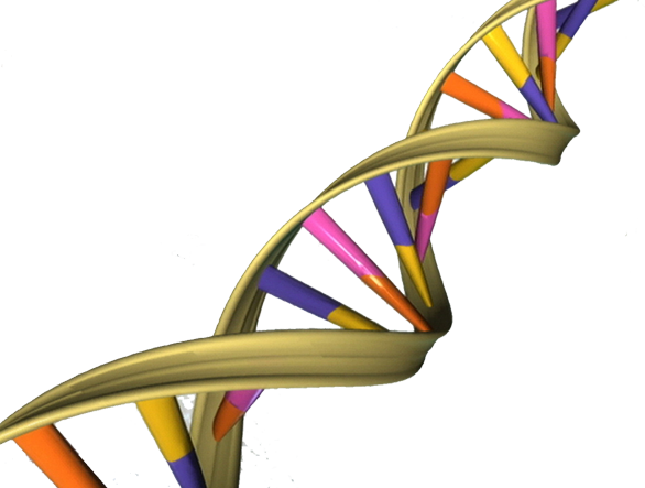 PNG Genetics - 67095