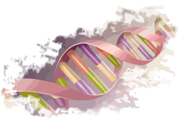 PNG Genetics - 67097